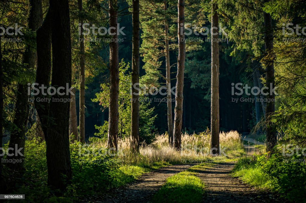 A path into to depth of a forest. stock photo