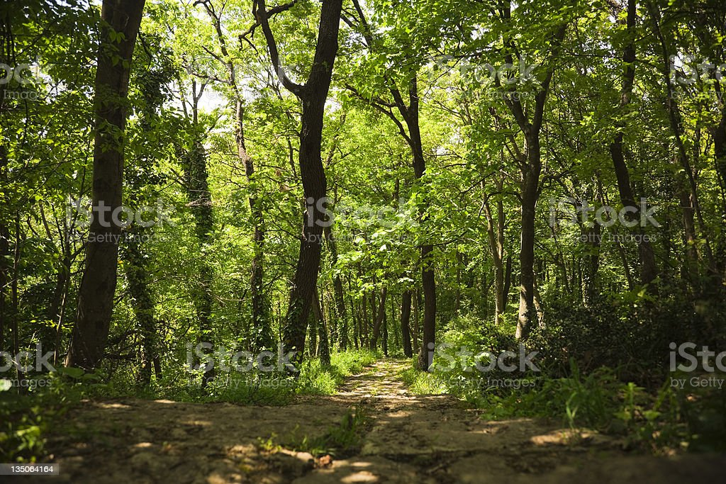 Path Into Vivid Green Forest royalty-free stock photo