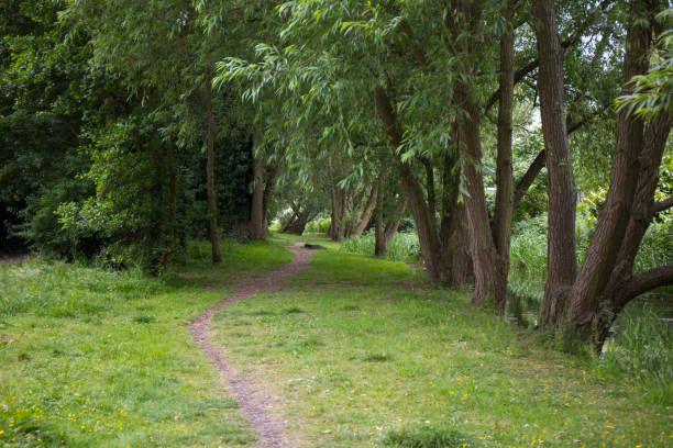 Path leading through a copse stock photo