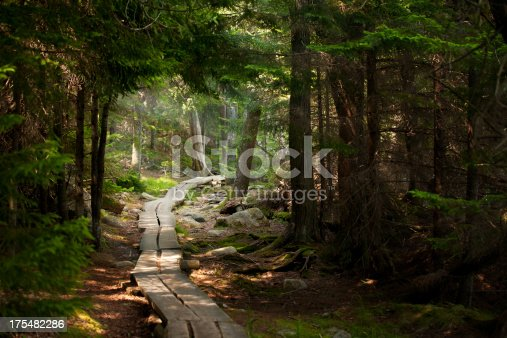 A very quiet path through the forest.  The path is made of split timber.