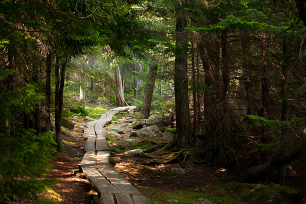 Path made of planks through the woods stock photo
