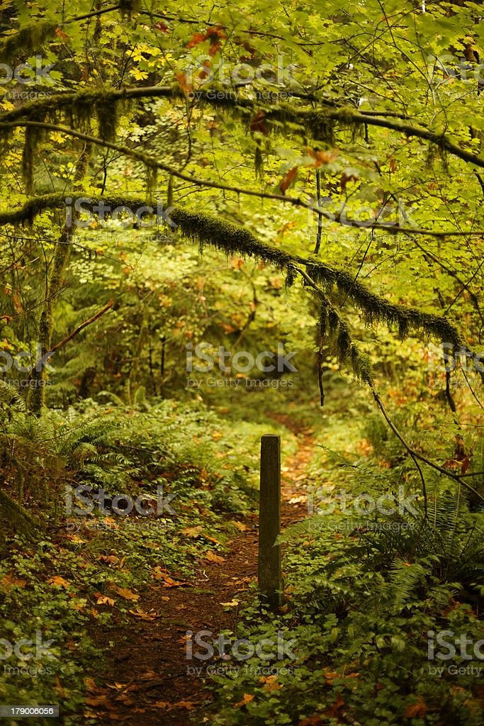 Path marked out in the forest royalty-free stock photo