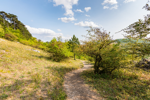 Path near the fields and meadow, agricultue, trees and bushes. Summer weather and blue sky