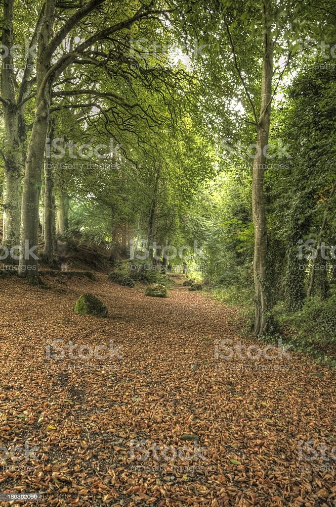 Path of Leaves stock photo