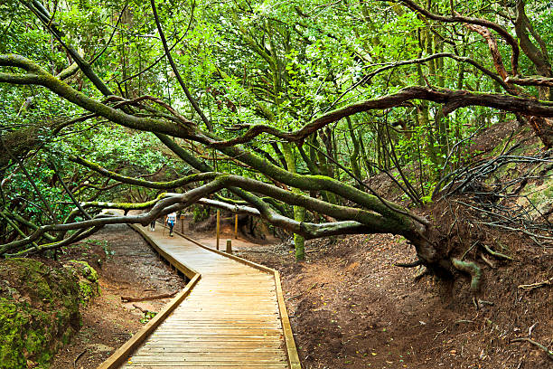Path of the Senses, Anaga National Park, Tenerife stock photo