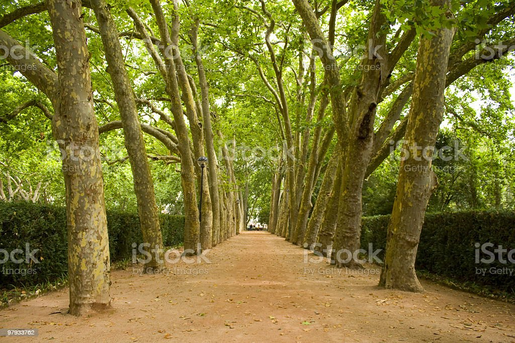 Path of trees royalty-free stock photo