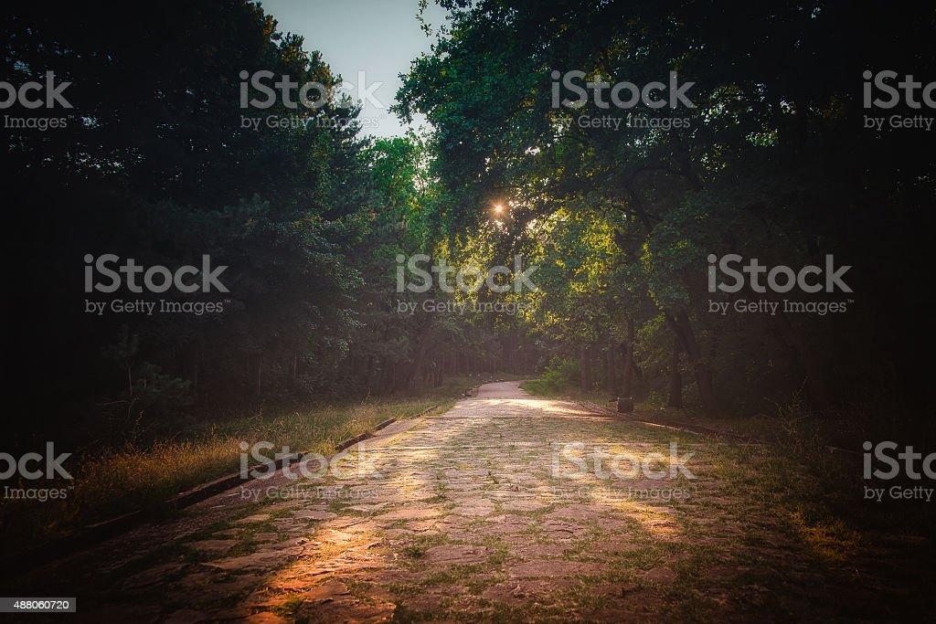 Path on park stock photo