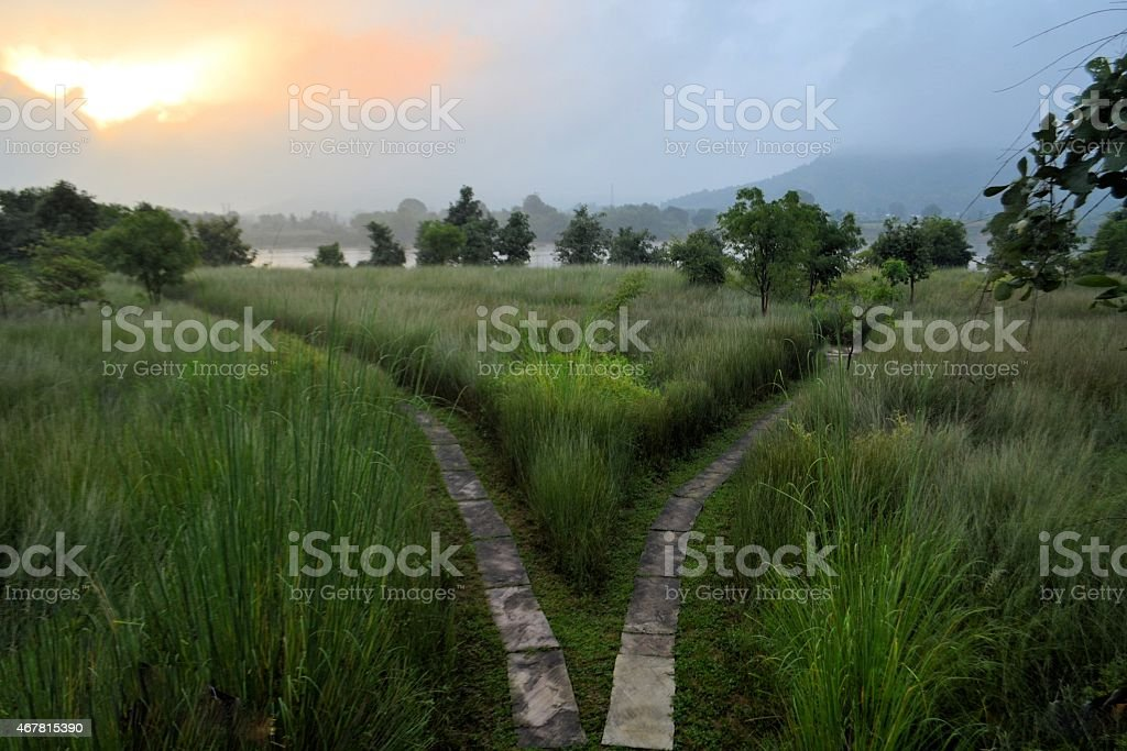 Path splits two directions, fork in the road stock photo