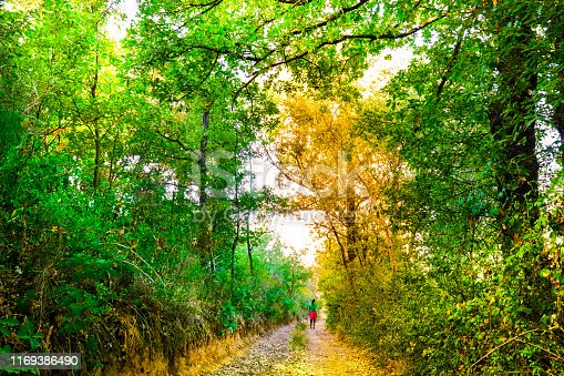 Girl walking on a dirt path between trees and green nature. It conveys a feeling of peace.