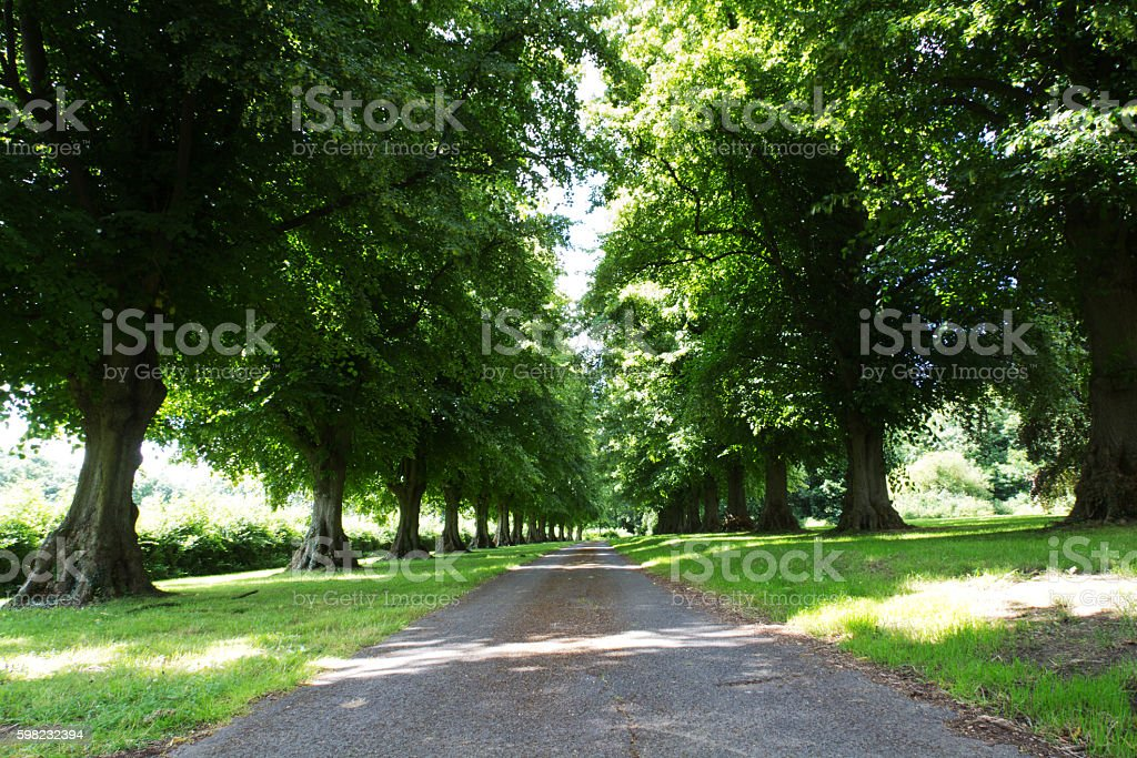 Path surrounded by trees on both sides foto royalty-free