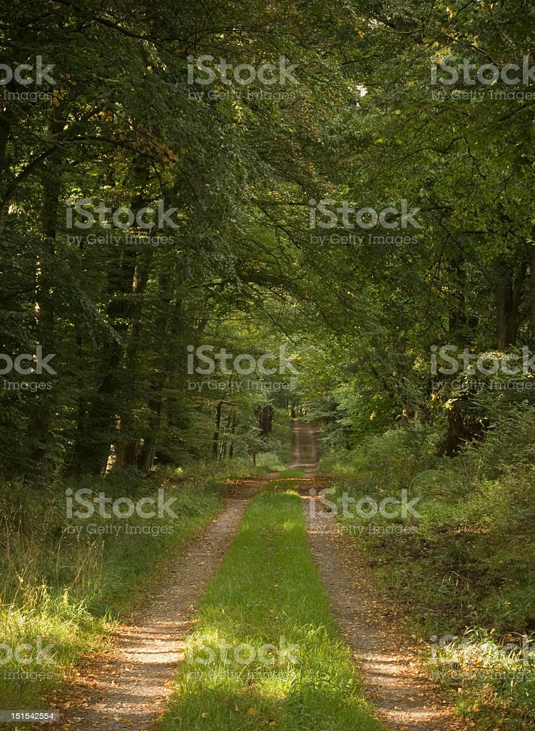 Path throgh forest with green decidiuous trees stock photo