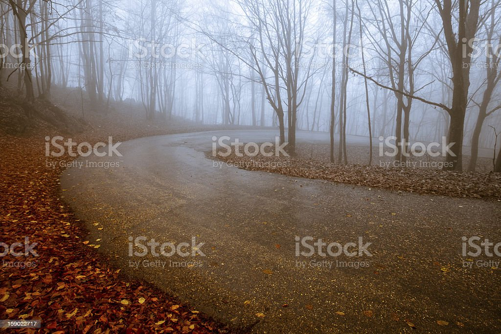 path through a fall forest royalty-free stock photo