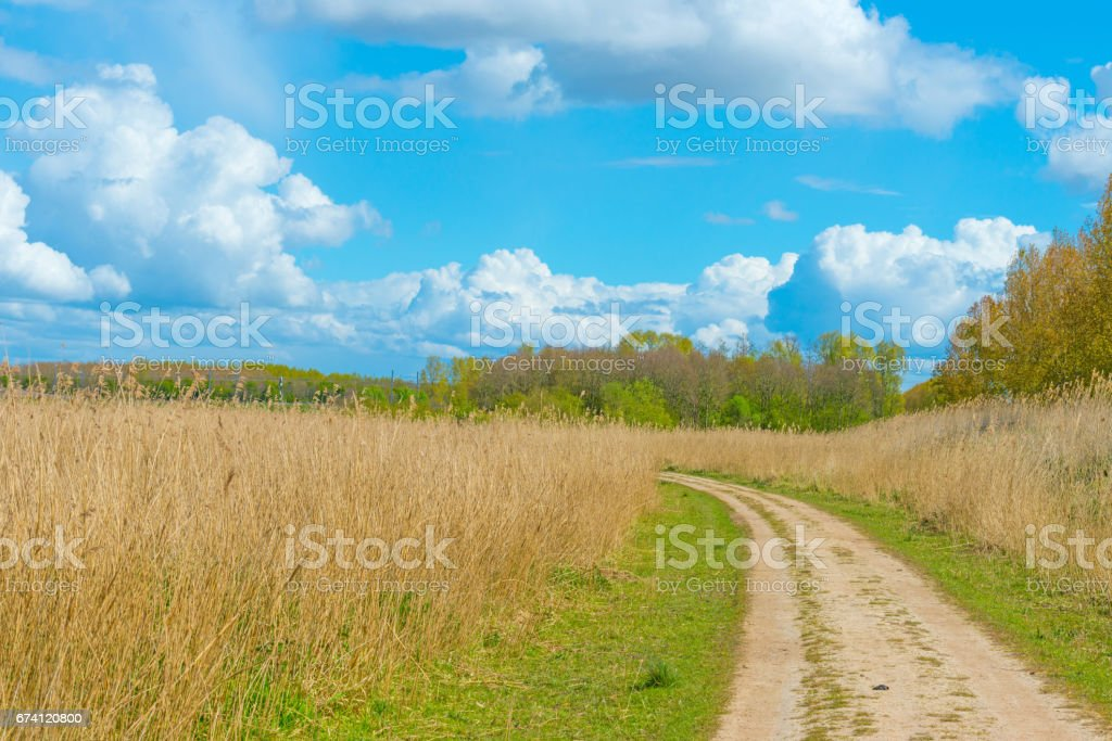 Path through a field below dark clouds in spring in sunlight royalty-free stock photo