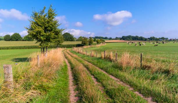 Path Through a Field in Summer stock photo
