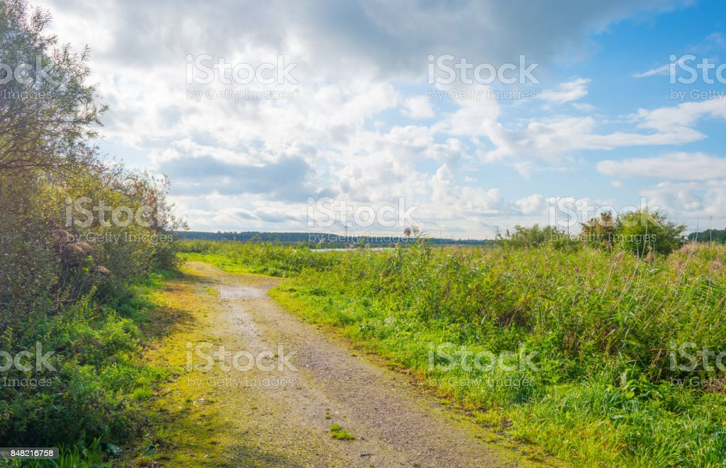 Path through a field in sunlight in summer stock photo
