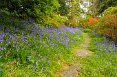Path through a field of bluebells
