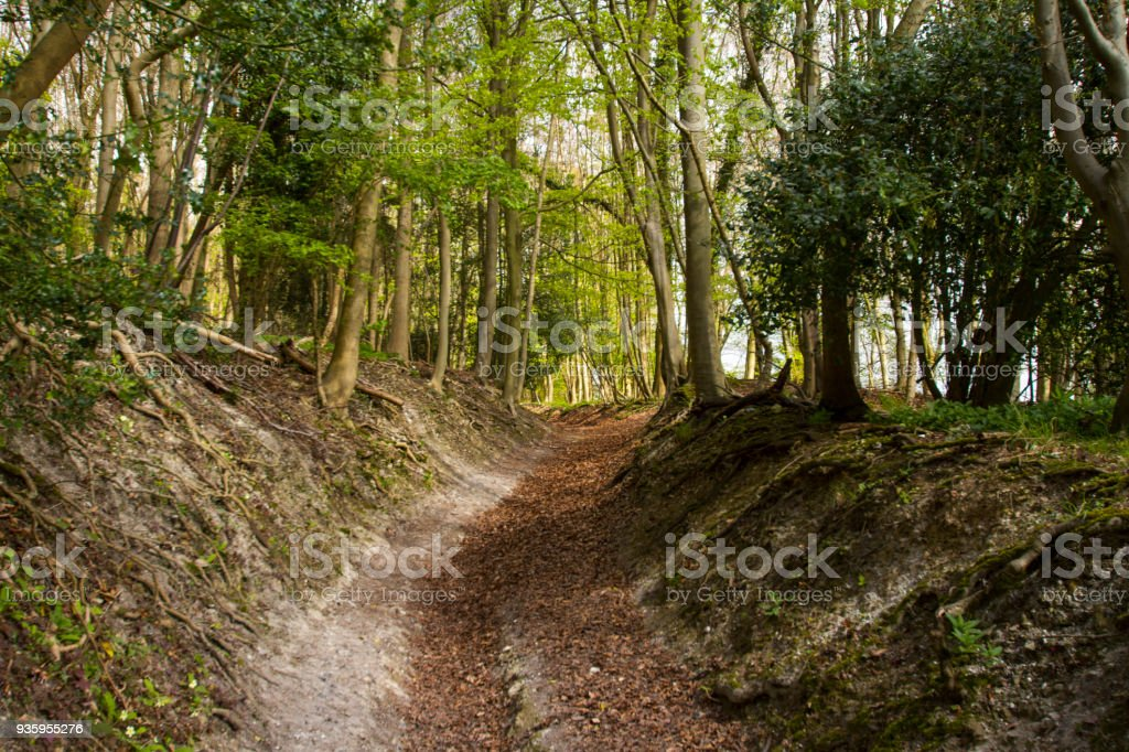A path through a forest in the Chiltern Hills stock photo