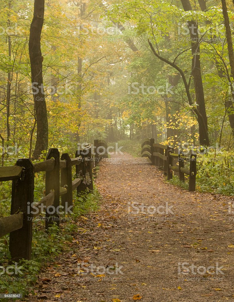 Path through a misty Autumn forest royalty-free stock photo
