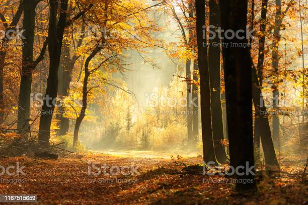 Photo of Path through a misty forest during a beautiful foggy autumn day