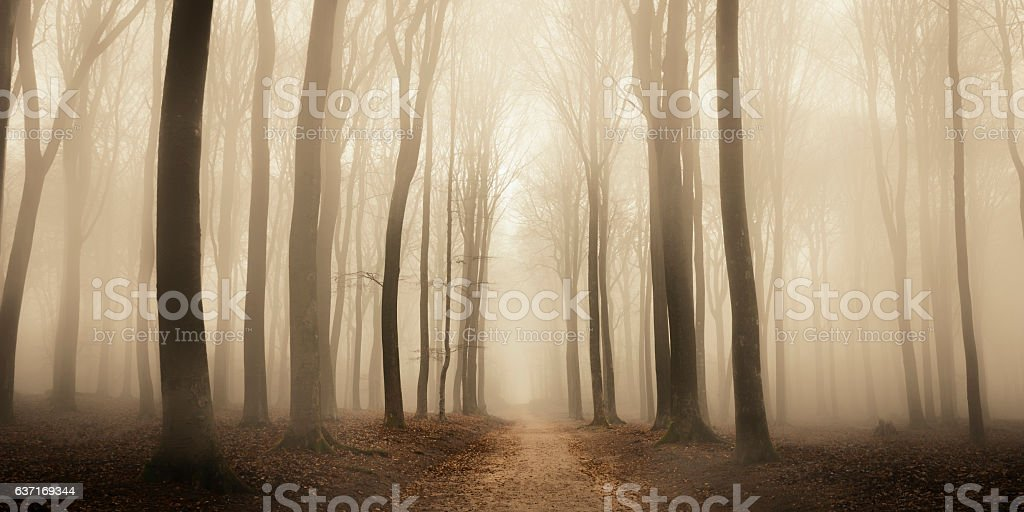 Path through a misty forest during a foggy winter day ストックフォト
