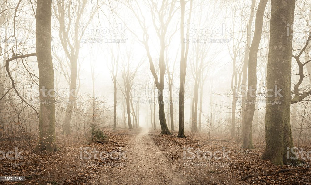 Path through a misty forest during a foggy winter day foto