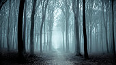 istock Path through a misty forest during a foggy winter day 870867476