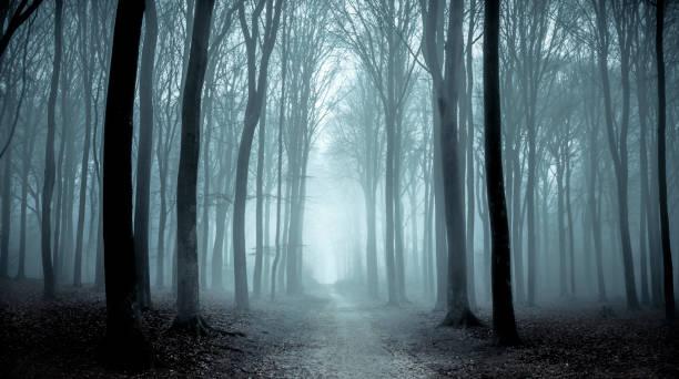 ścieżka przez mglisty las podczas mglistego zimowego dnia - upiorny zdjęcia i obrazy z banku zdjęć