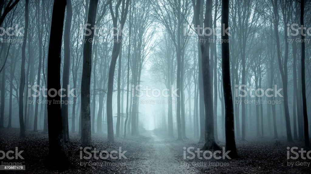 Path through a misty forest during a foggy winter day stock photo