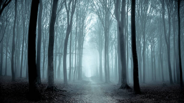 path through a misty forest during a foggy winter day - horror stock pictures, royalty-free photos & images