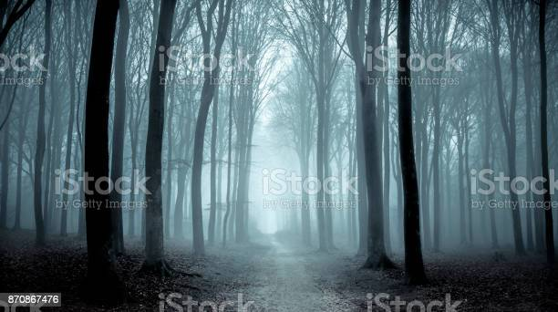 Footpath through a Beech forest during a foggy winter morning. The forest ground is covered with brown fallen leaves and the path is disappearing in the distance. The fog is giving the forest a desolate and depressing atmosphere.