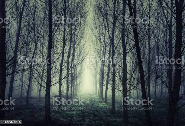 Photo of Path Through a Misty Grove During a Foggy Winter Morning