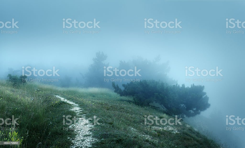 Path through a mysterious dark old forest in fog stock photo