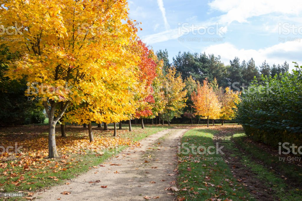 Path through autumnal trees. stock photo