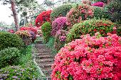 Path Through Azalea Garden
