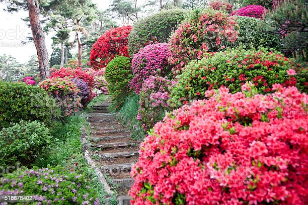 wooden stair through azalea garden