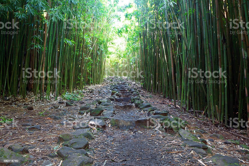 Path through Bamboo Forest in Maui stock photo