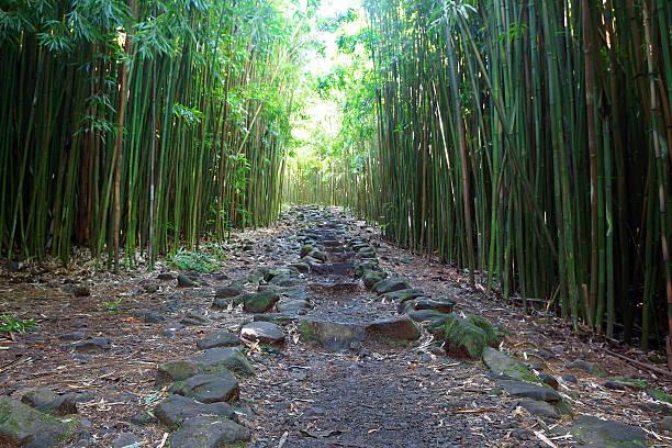 Weg durch Bambus-Wald in Maui – Foto