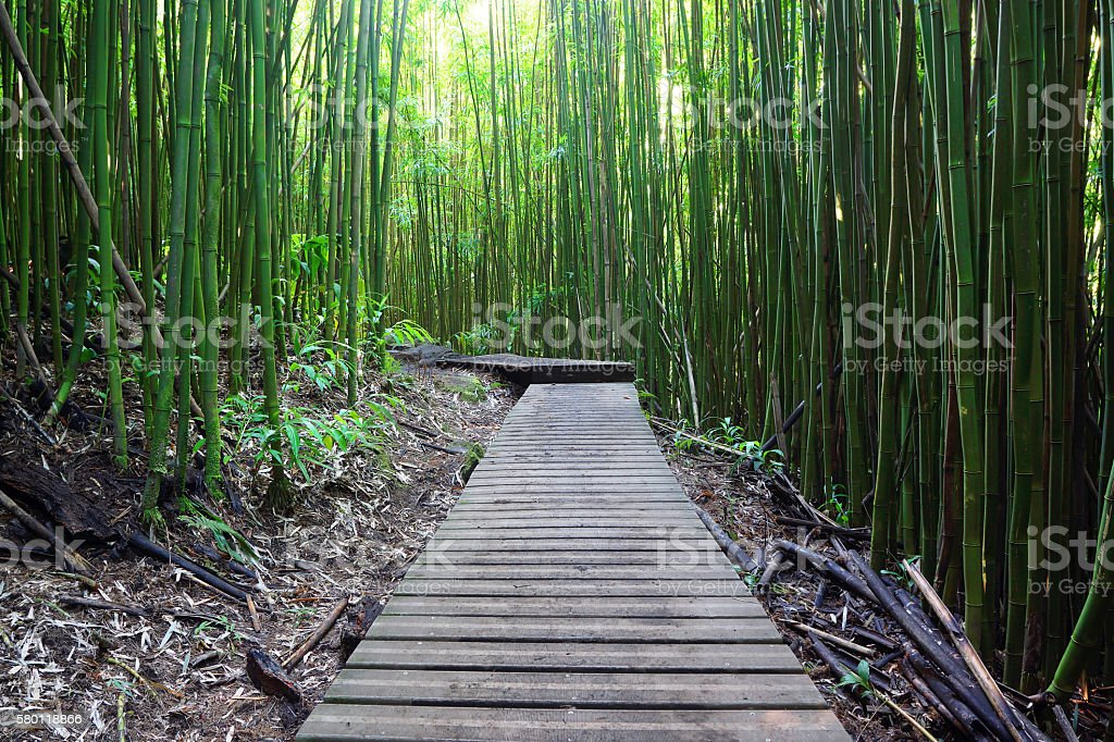Weg Durch Bambuswald In Maui Stock Fotografie Und Mehr Bilder Von