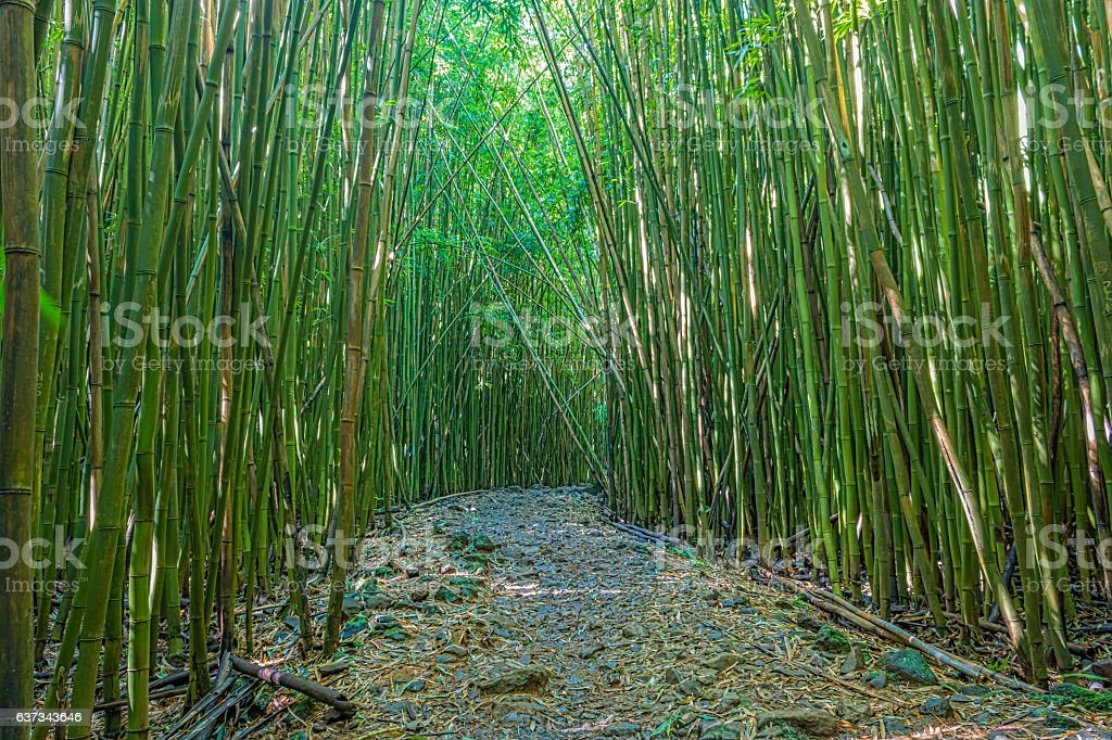 Path Through Bamboo Forest stock photo