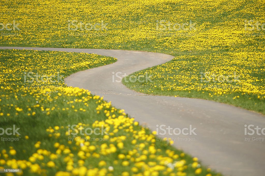 path through dandelions stock photo