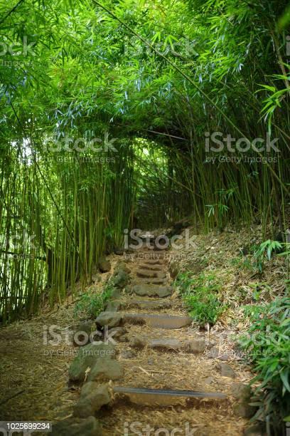Photo of Path through dense bamboo forest, leading to famous Waimoku Falls. Popular Pipiwai trail in Haleakala National Park on Maui, Hawaii
