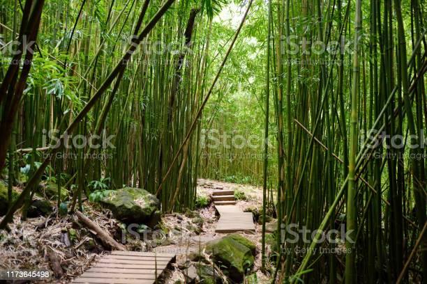 Photo of Path through dense bamboo forest, leading to famous Waimoku Falls. Popular Pipiwai trail in Haleakala National Park on Maui, Hawaii.