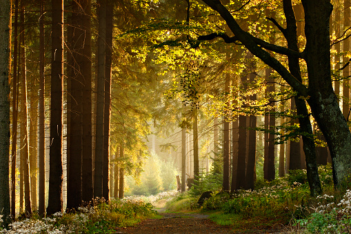 Path through Enchanted Autumn Forest
