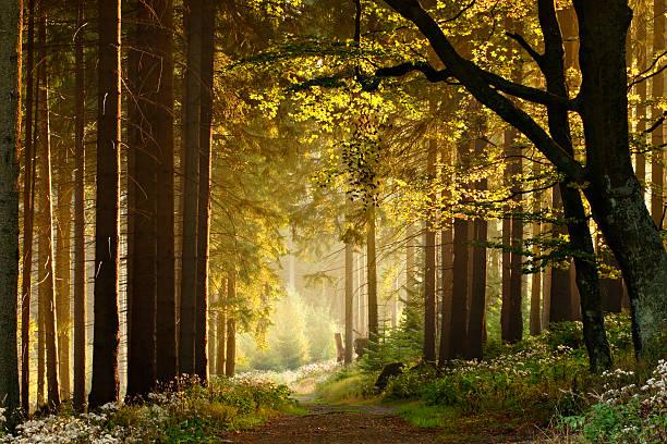 verzauberte weg durch herbstliche wald - deutsche bäume stock-fotos und bilder