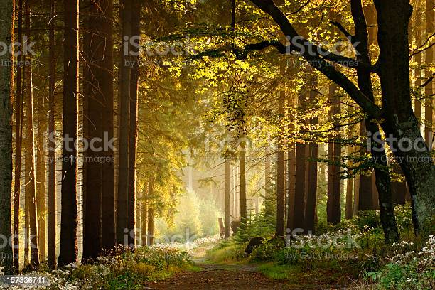 Photo of Path through Enchanted Autumn Forest