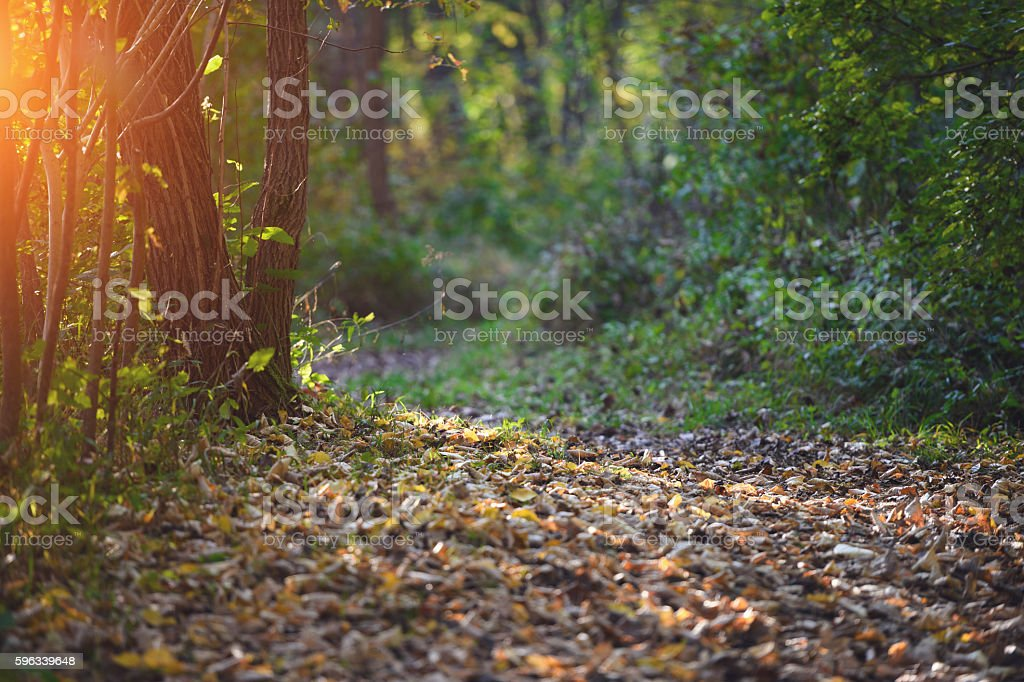 Path Through Forest royalty-free stock photo