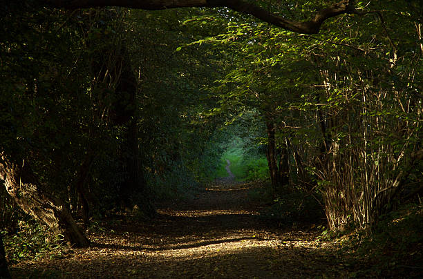 Path through forest stock photo