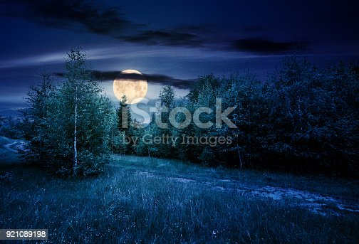 istock path through forested grassy meadow at night 921089198