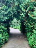 Path through green plant tunnel