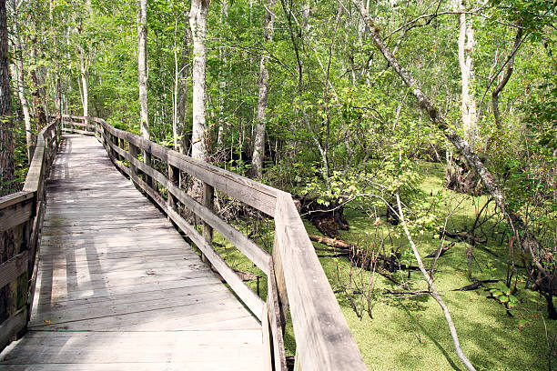 path through reedy creek swamp - kissimmee stock photos and pictures